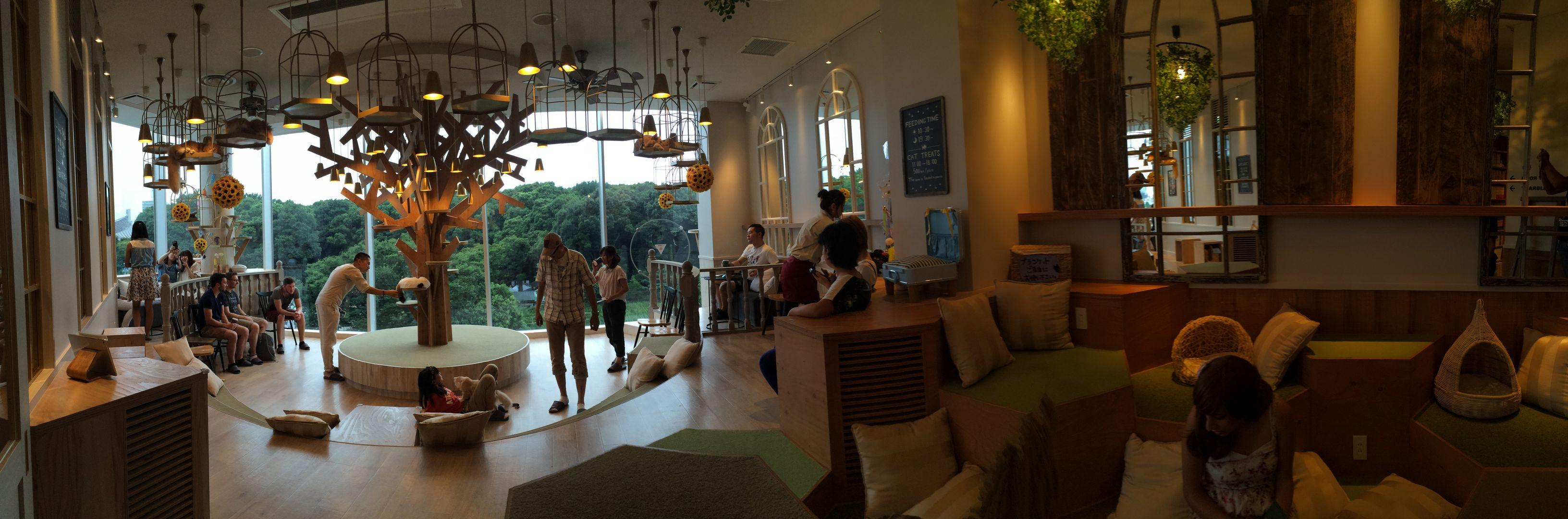 Mocha Katzen Café