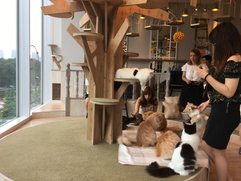 Mochas Katzen Cafe Japan