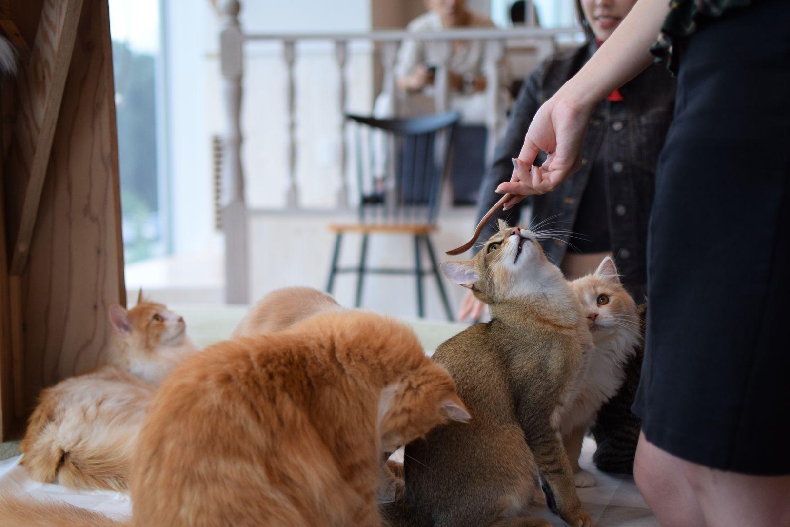 Mocha Cat Café, Tokyo