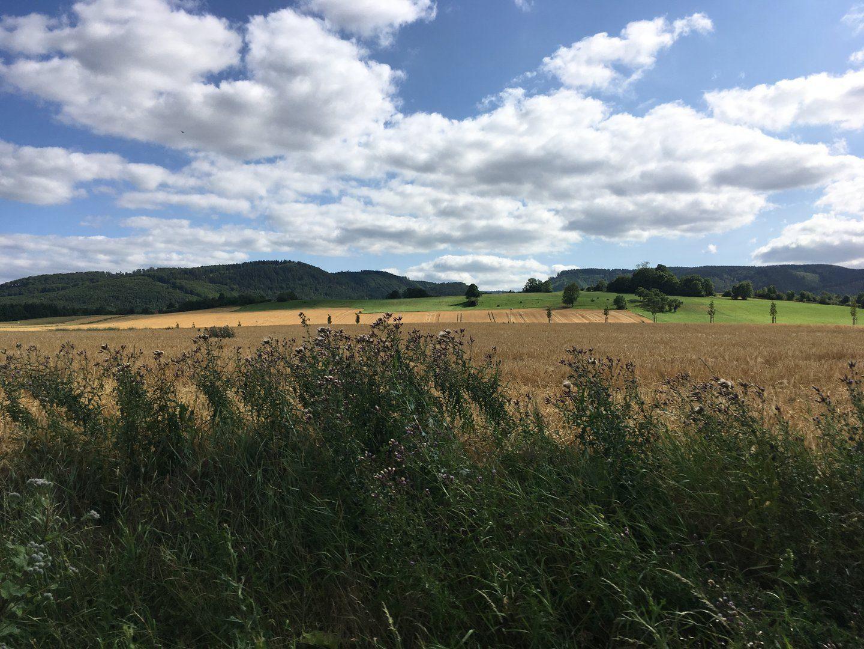 Klosterwanderweg bei Drübeck