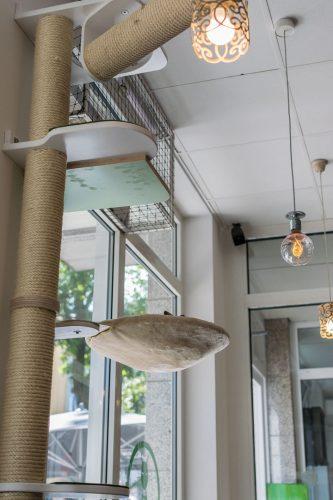 Klettermöglichkeit im Katzen Cafe
