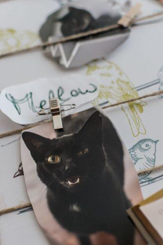 Katze Mellow