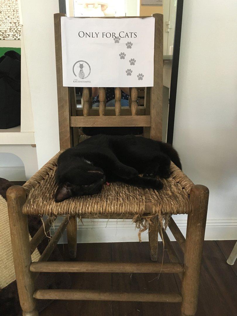 Schlafplatz für Katzen