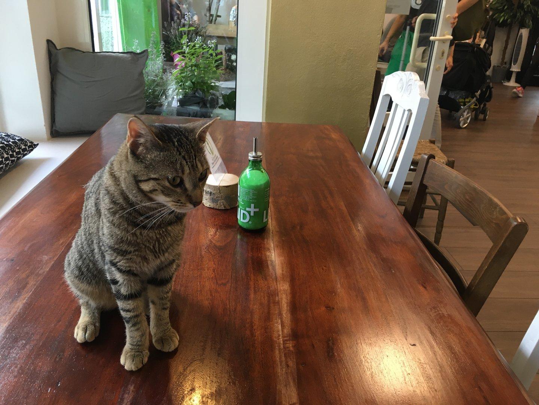 Katze auf Tisch Katzencafe