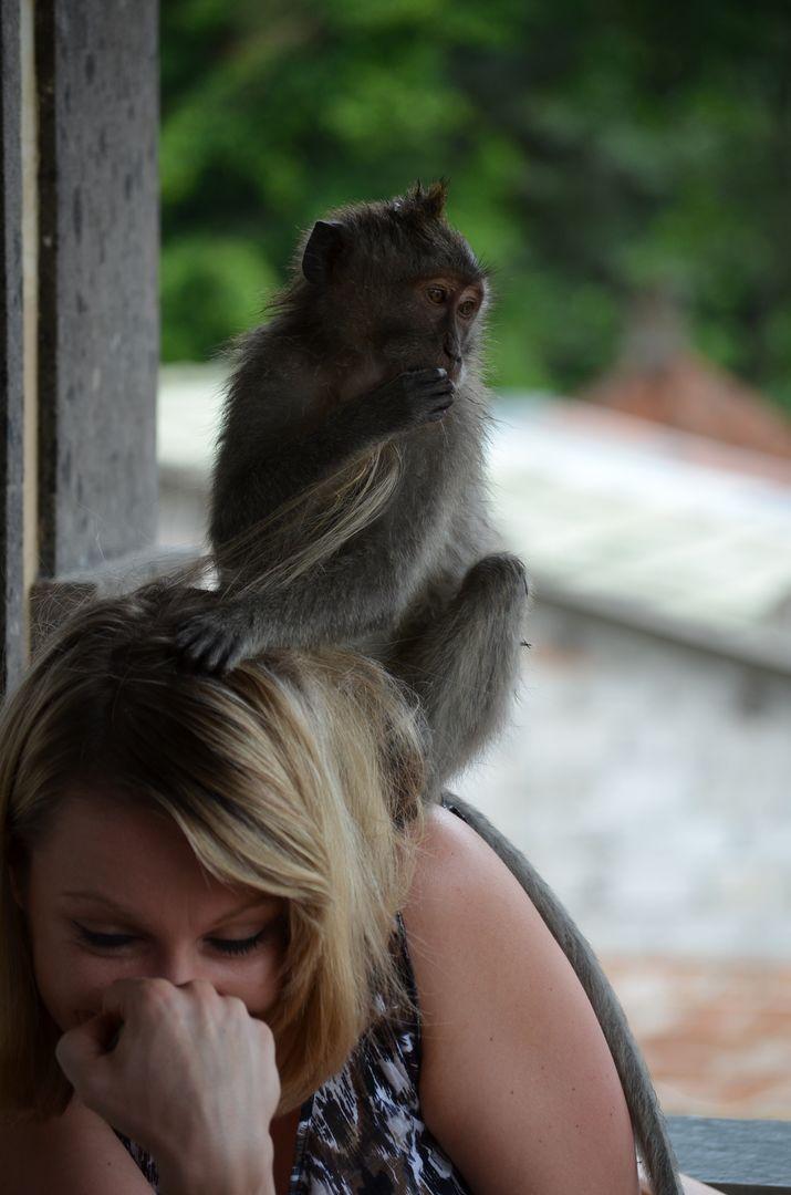 Affen in Bali