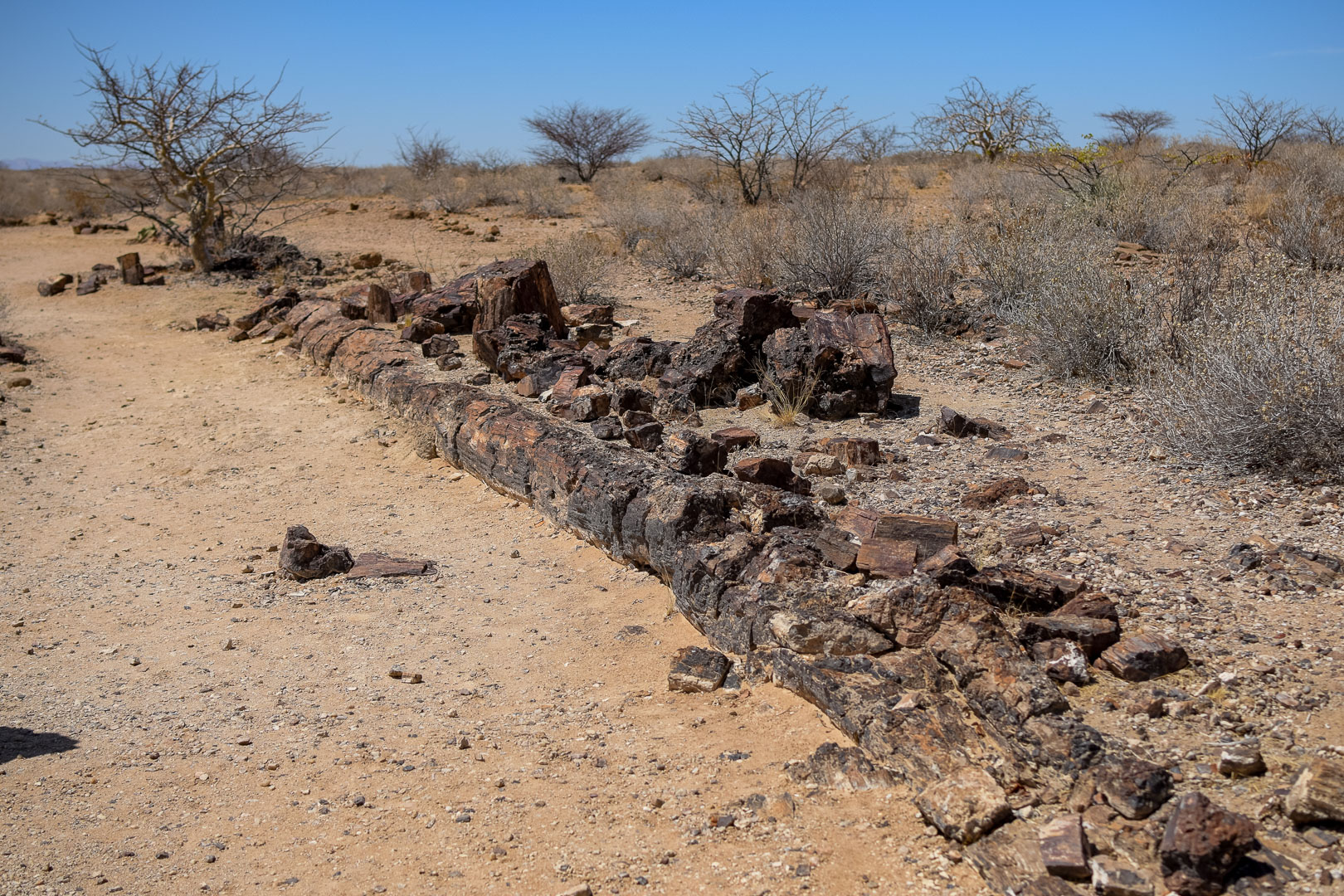Namibia petrified forest