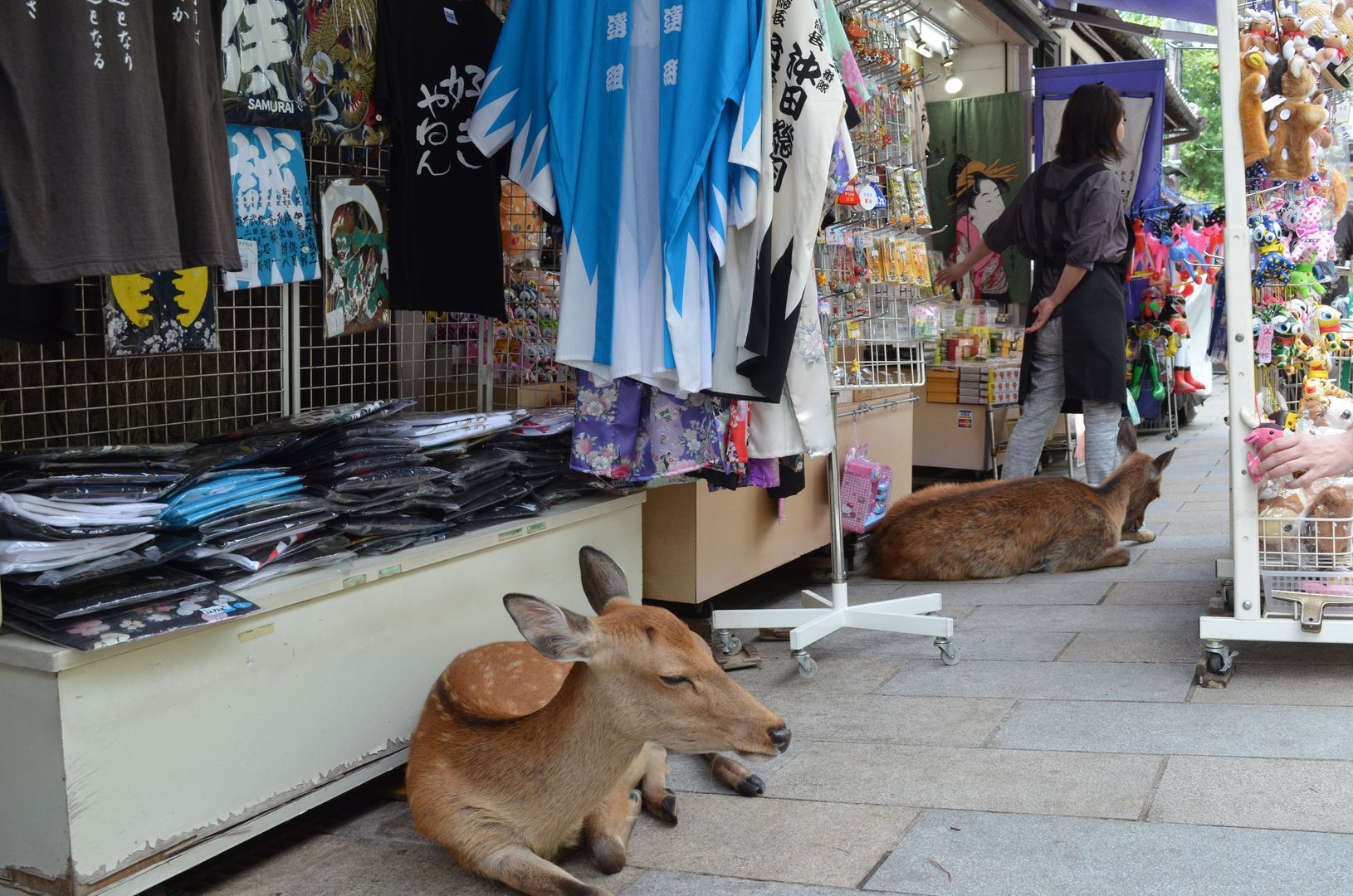 Japan-Nara-Hirsche