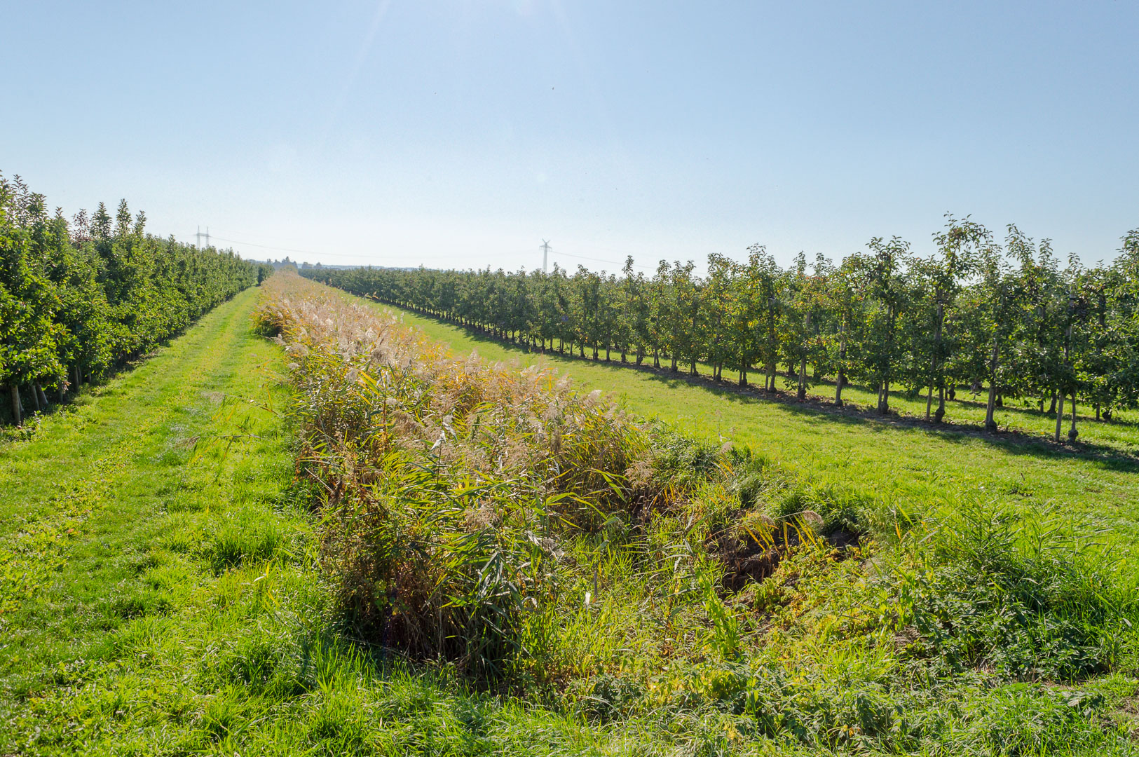 Altes-Land-Twielenfleth