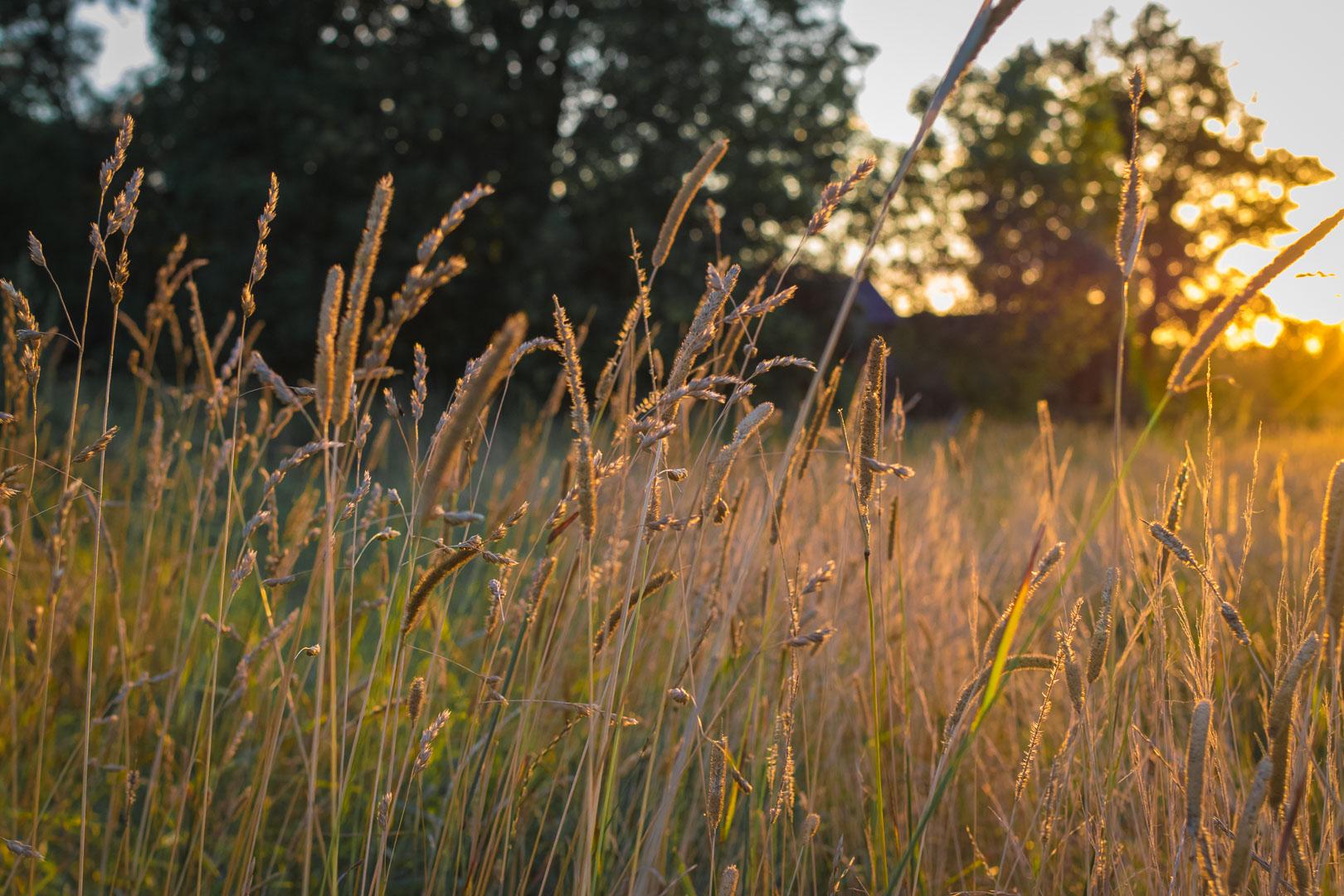 Goldene-Stunde-Fotografie
