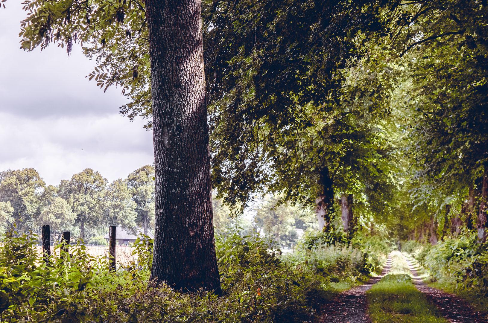 Waldweg-Wardersee