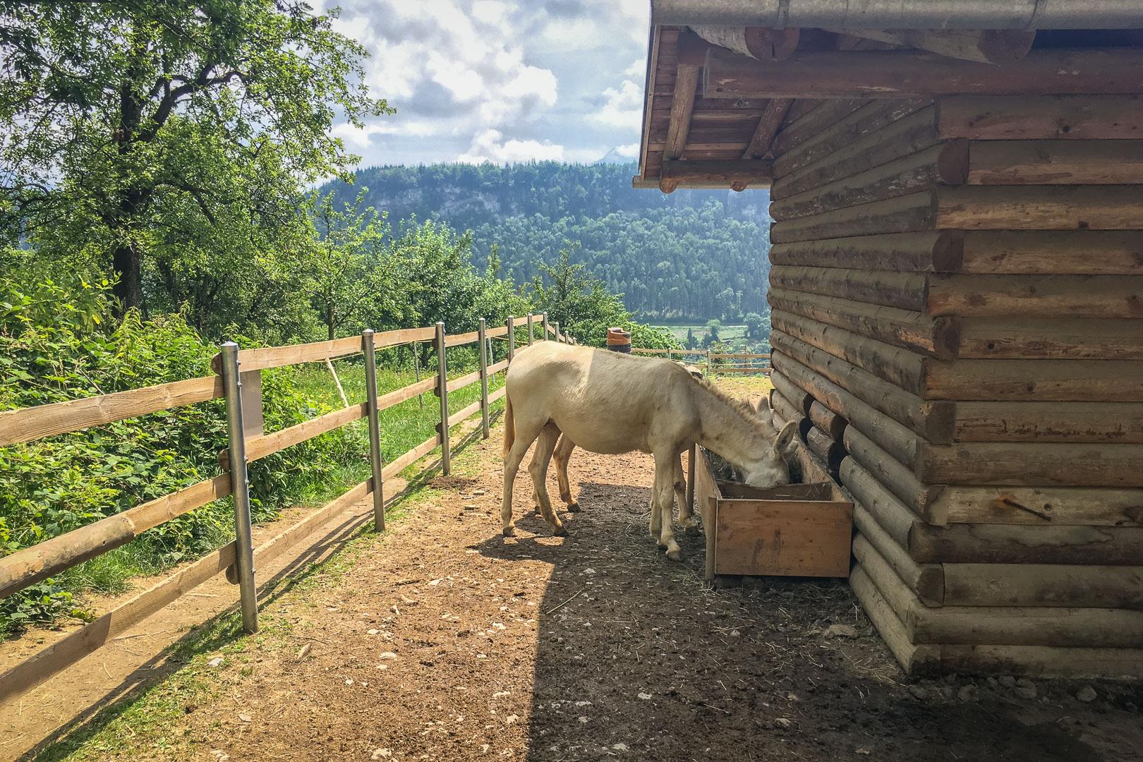 Wildtierpark-Feldkirch-Vorarlberg