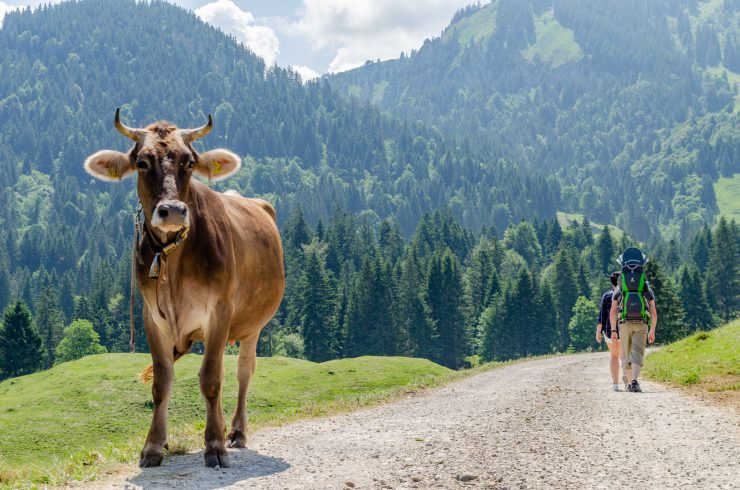Schetteregg-Wanderweg-Alpe-Obere-Falz