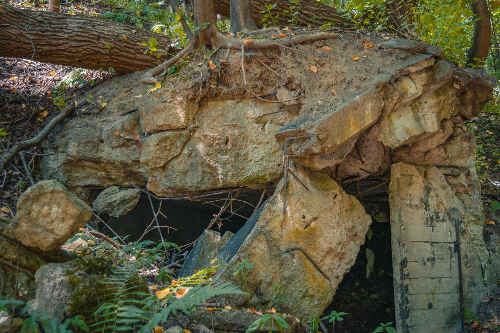 Baum-auf-Ruine