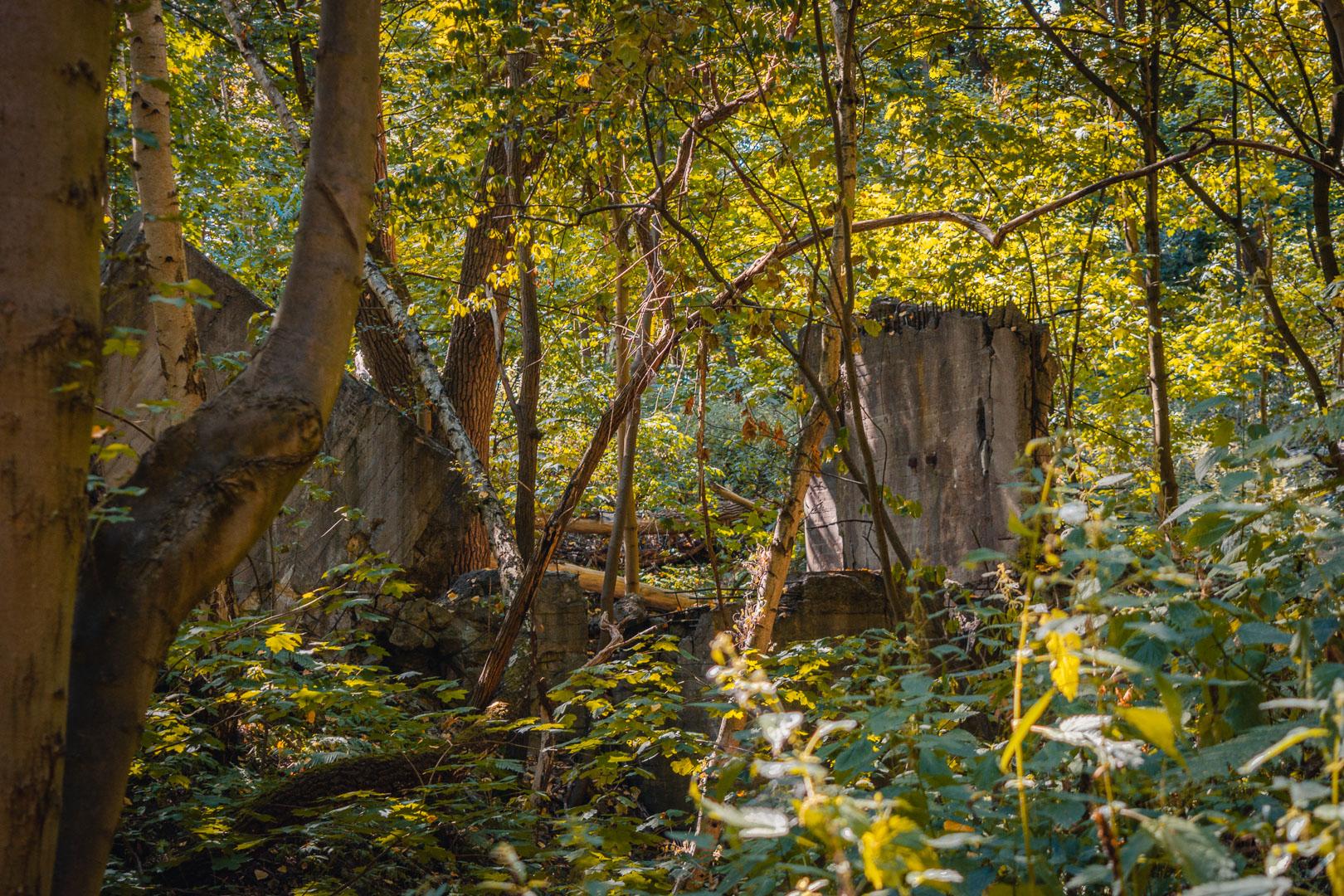 Ruine-im-Wald-Kruemmel